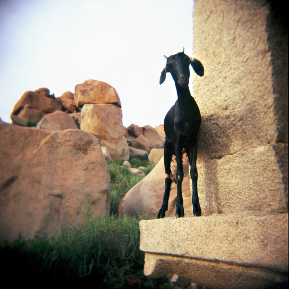 skinny goat hampi-160120